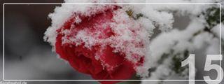 """Bild """"http://www.sarahsahni.de/infos-cms/galerien/Vorschau_Bild-des-Tages-2012_Winter/15.jpg"""""""